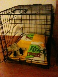 Trash to Treasure Doggy Bed