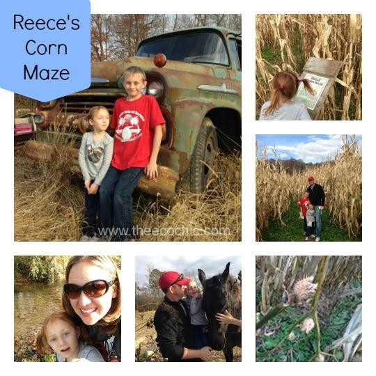 Reece's Corn Maze North Georgia
