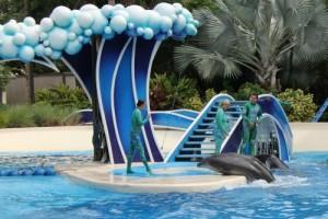 Sea World Dolphin Show