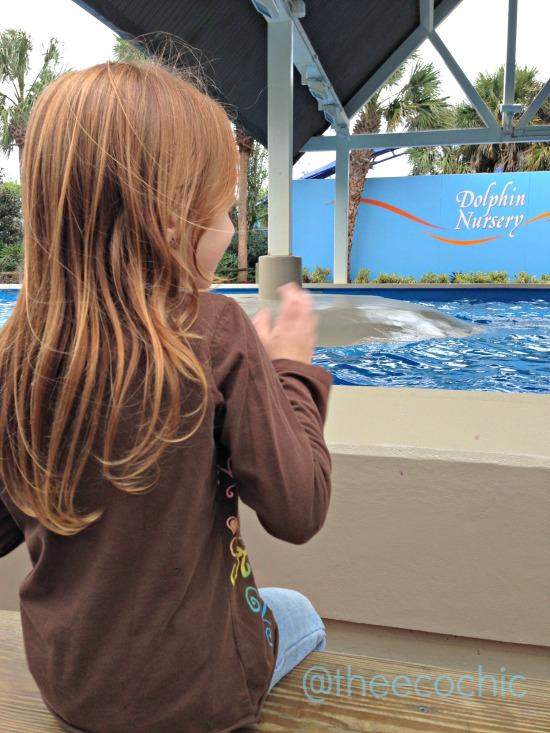 dolphin nursery sea world