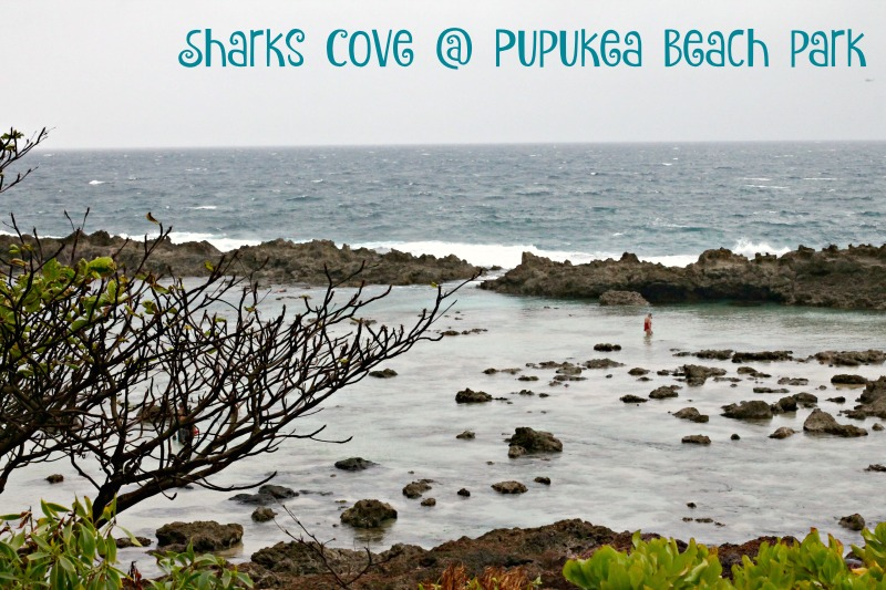 sharks cove oahu hawaii north shore