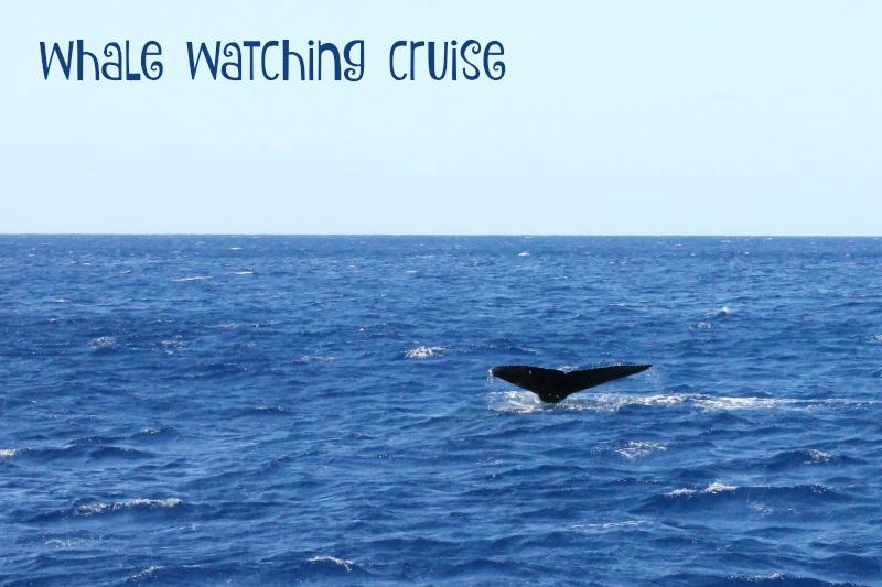 whalewatchingHI