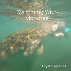 Swimming with Manatee Crystal River Florida